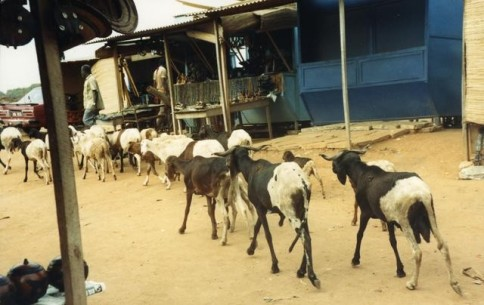 African Store with Goats305