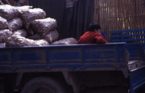 Chinese Man in Truck309