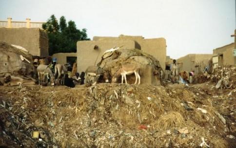 Donkeys in African Village304