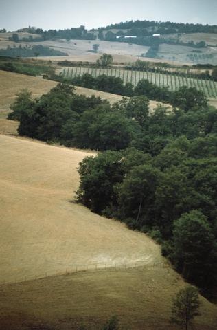 Farmland480
