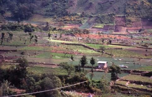 Guatemalan Farmland309