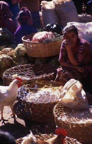 Guatemalan Poultry Market480