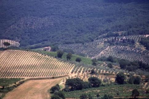 Italian Farmland 2322