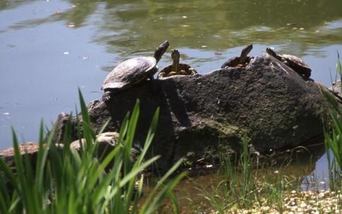 Turtles 01303